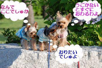 20100714120010420.jpg