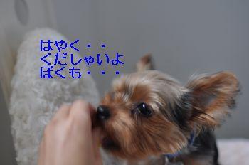 20101122200205b78.jpg