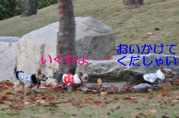 2010120312243793d.jpg