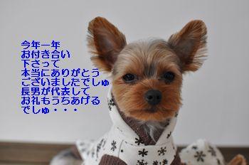 20101230215721167.jpg