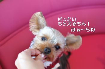 20110115191852fab.jpg