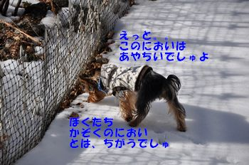 20110211164841b2b.jpg