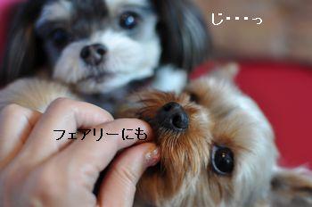 201103061007340b7.jpg