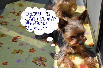 20110330121121080.jpg