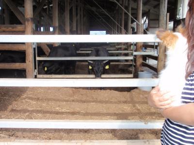 牛をみるひな