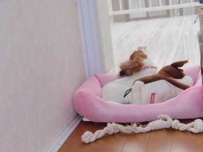 おもちゃと一緒に寝るひな2