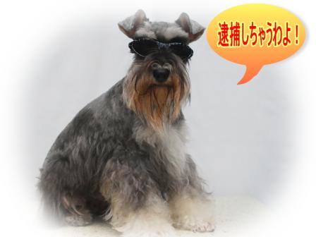 DSC_0013_20110923115202.jpg
