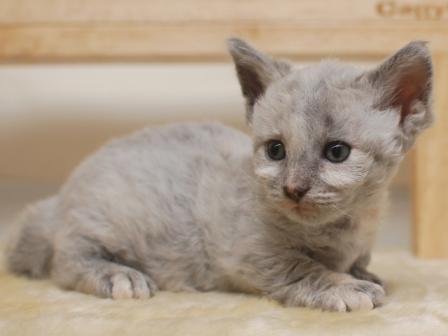 スクーカム 子猫
