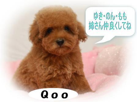DSC_0056_20111008125712s.jpg