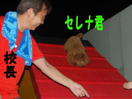 DSC_0105_20110523163903.jpg