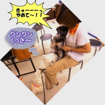 RIMG0043_20110731124425.jpg