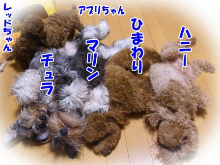 RIMG0046_20110922211736.jpg