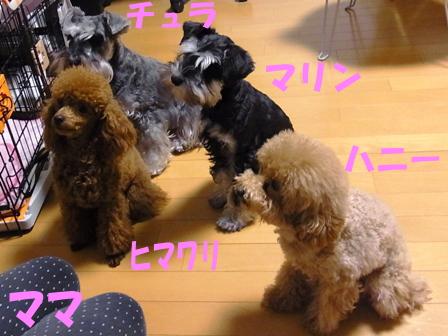 RIMG0098_20110526214437.jpg