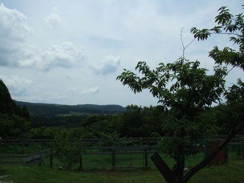 マロンの樹5