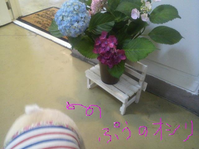 snap_puko0429_201166153642.jpg