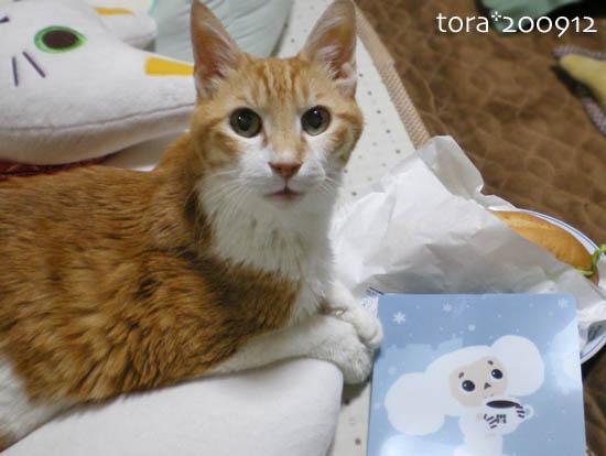 tora09-12-76.jpg