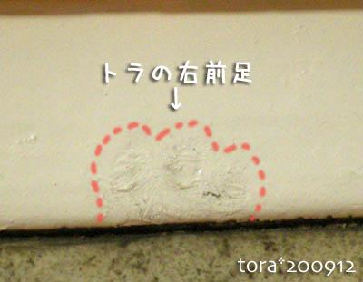 tora09-12-96.jpg
