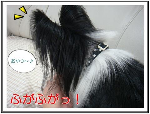 DSC05530.jpg