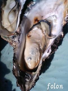 牡蠣.08