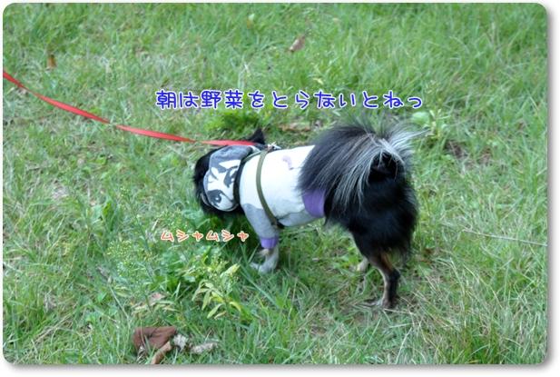 024_20090921180538.jpg