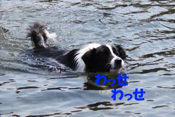 泳ぐライフ