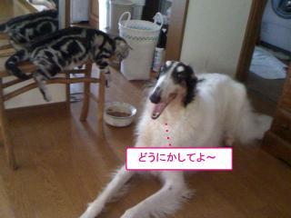 20100723-003.jpg