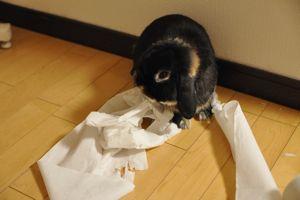 toilet paper3