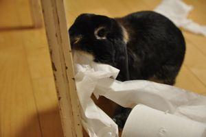 toilet paper2
