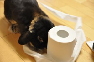 toilet paper1