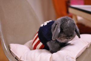 pooh sweater3