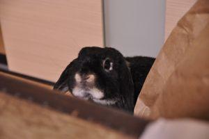 Oct15-2009-3002.jpg