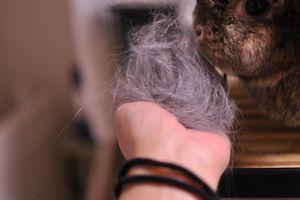 Oct27-200904.jpg