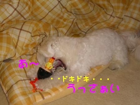 038_convert_20091103190603.jpg