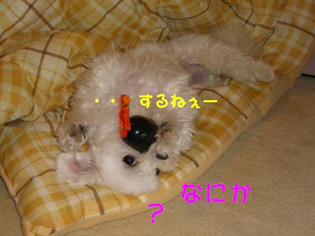 040_convert_20091103190927.jpg