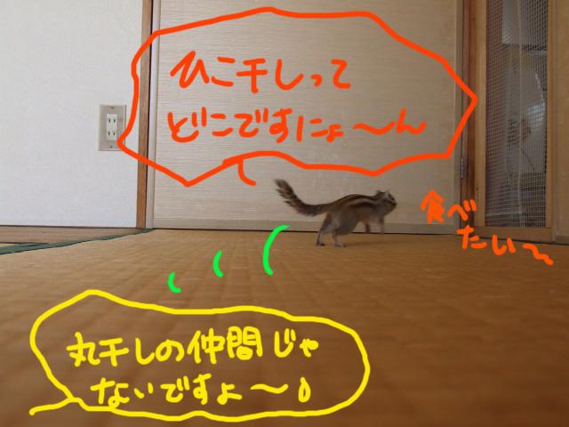 DSCF110707c0638.jpg