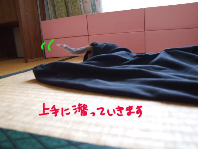 DSCF110811e4472.jpg