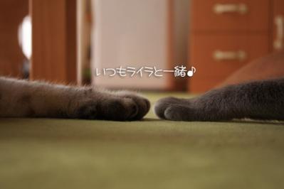 ←アクア ライラ→