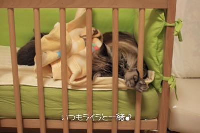 ハルくんのベッドですよ