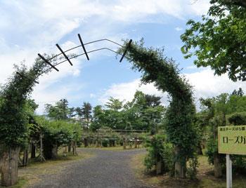 蔵王バラ園1