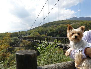 つつじ吊り橋1
