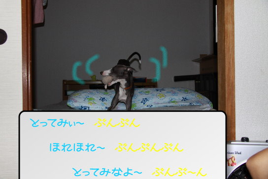 1_20091110173319.jpg
