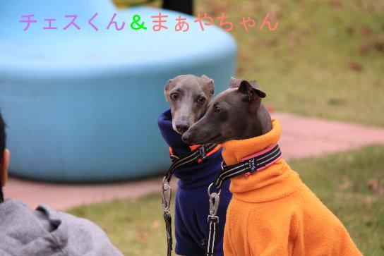 チェスくん&マーヤちゃん