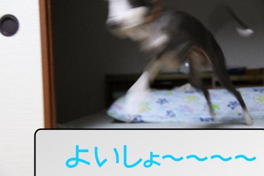 3_20091110173319.jpg