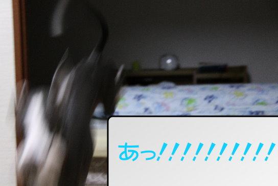 4_20091110173319.jpg