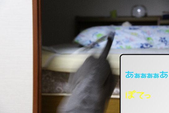 5_20091110173318.jpg