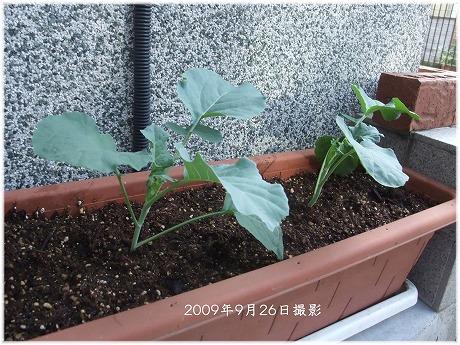2009-09-26-30.jpg