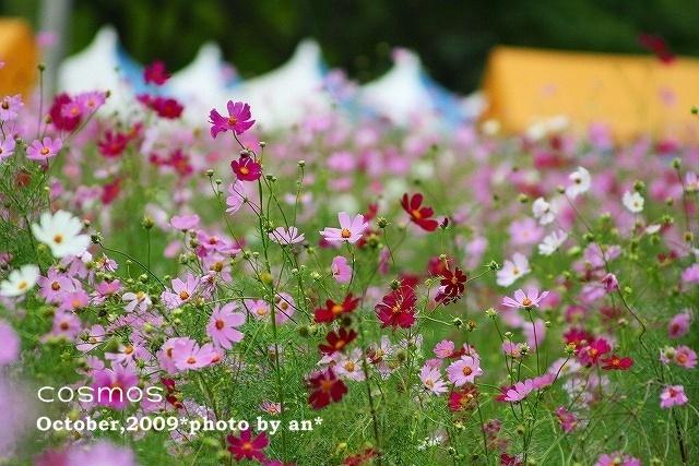 20091008_2644.jpg