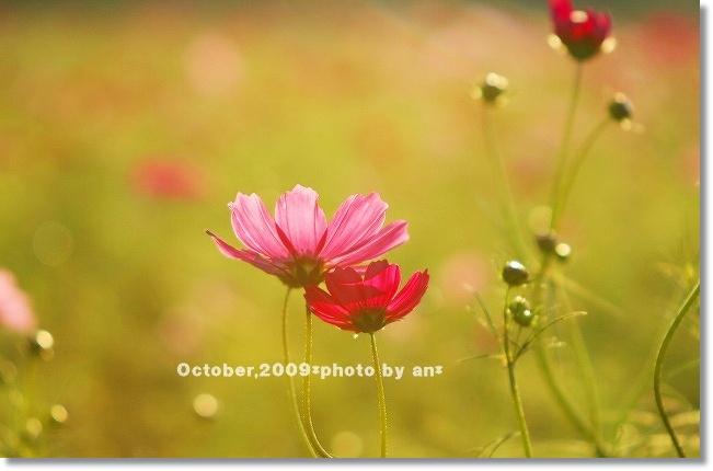 20091010_3152.jpg