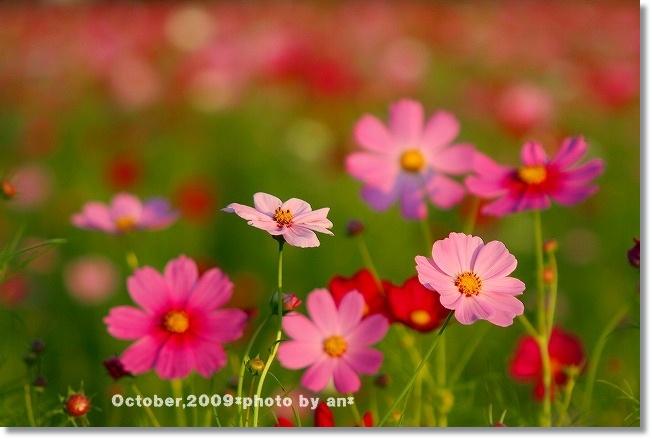 20091010_3176.jpg