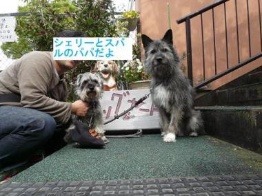 しぇりすばるくん2011.GW伊豆 064
